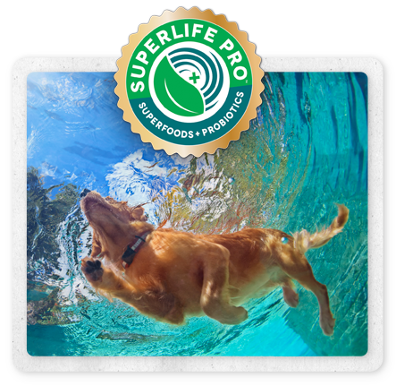superlife-dog-swimming